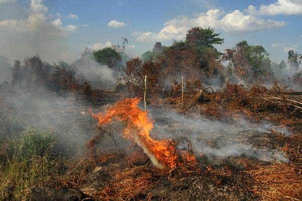 Api membakar semak belukar diatas lahan gambut yang terbakar di Kabupaten Kampar, Riau, Senin (24/7). - ANTARA/Rony Muharrman