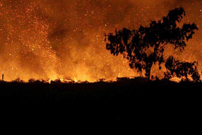 Ilustrasi-Suasana kebakaran lahan gambut di Desa Lapang, Kecamatan Johan Pahlawan, Aceh Barat, Aceh, Rabu (30/1/2019). - ANTARA/Syifa Yulinnas
