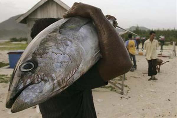 Seorang nelayan di Lampuuk, Banda Aceh, memanggul ikan tuna. - Reuters/Tarmizy Harva