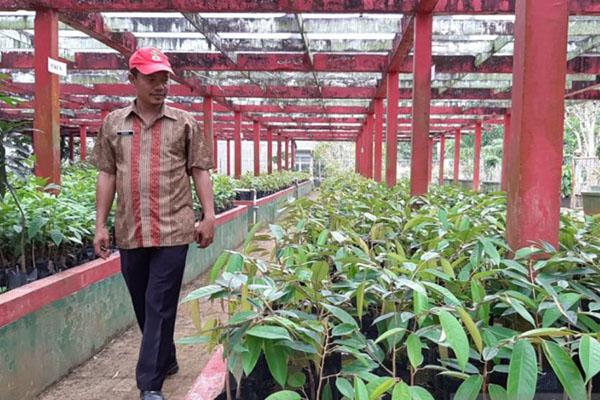 Kepala UPT BBIH Kalbar, Masudi, di lokasi pembibitan durian. - Antara