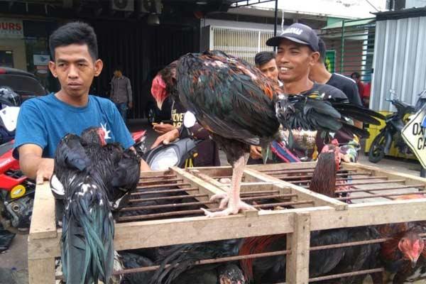 Pedagang dan ayam dagangan di pasar tradisional di Makassar. - ANTARA