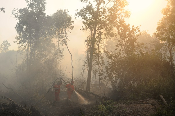 Petugas Manggala Agni Daops Banyuasin berusaha memadamkan kebakaran lahan yang terjadi di Desa Kayu Arehh, Kertapati Palembang, Sumatera Selatan, Minggu, (18/8/2019). - ANTARA/Ahmad Rizki Prabu