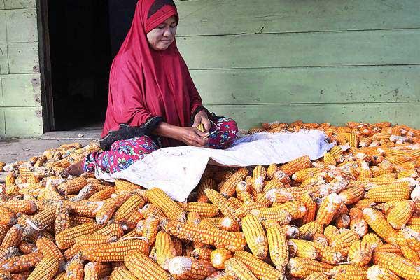 Petani mengupas biji jagung di Bagansiapiapi, Rokan Hilir, Riau, Sabtu (5/1/2019). - ANTARA/Aswaddy Hamid