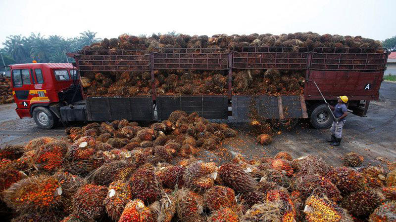 Pekerja membongkar muatan kelapa sawit dari truk. - Reuters/Samsul Said