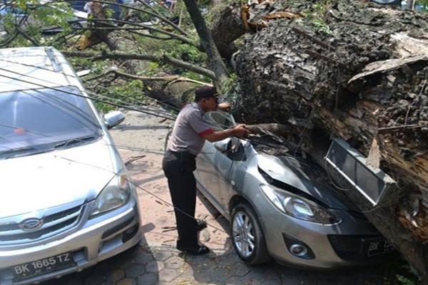 Pohon tumbang - Antara