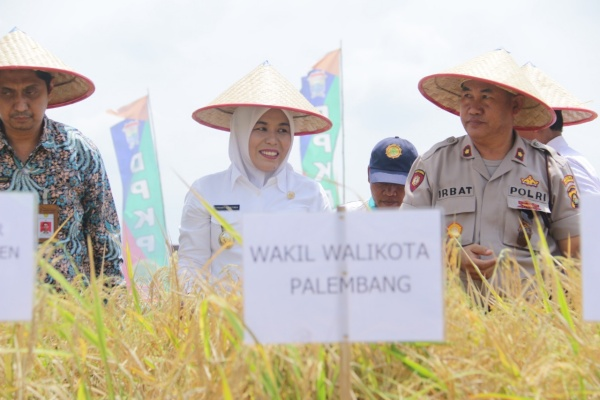 Wakil Wali Kota Palembang Fitriandi Agustinda (tengah) saat melakukan panen raya di salah satu kawasan sawah di Kota Palembang - Istimewa