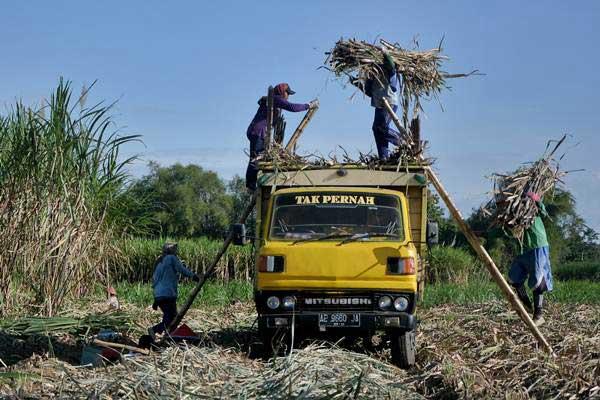 Buruh mengangkut tebu ke atas truk saat panen di Magetan, Jawa Timur, Selasa (11/7). - ANTARA/Fikri Yusuf