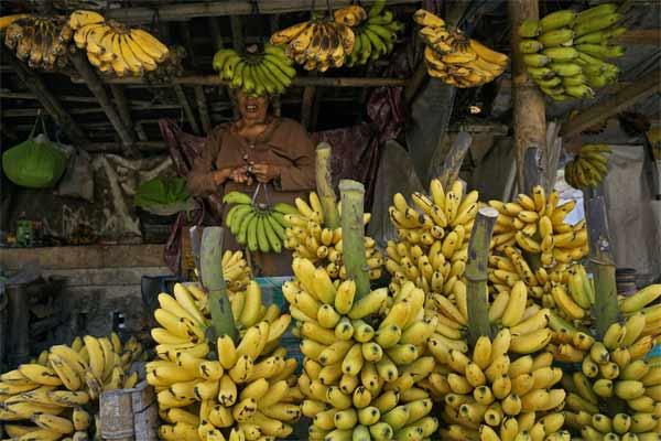 Pedagang menata pisang dagangannya di Pakem, Sleman, DI Yogyakarta, Jumat (19/5). - Antara/Hendra Nurdiyansyah