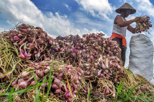 Petani memanen bawang merah di Dempet, Demak, Jawa Tengah - Antara/Aji Styawan