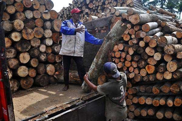 Pekerja menata potongan kayu Sengon atau Albasia di depo penampungan kayu Desa Kalibanger, Gemawang, Temanggung, Jawa Tengah, Jumat (4/1/2019). - ANTARA/Anis Efizudin