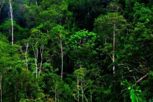 Ilustrasi hutan - istimewa