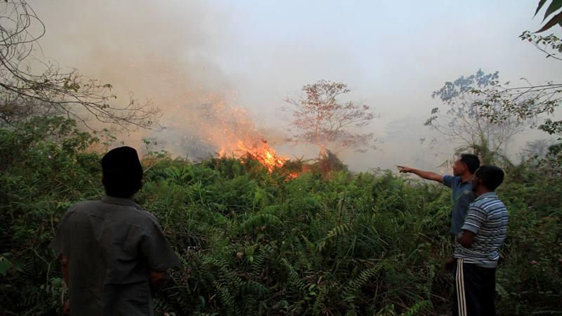 Ilustrasi kebakaran lahan. - Antara
