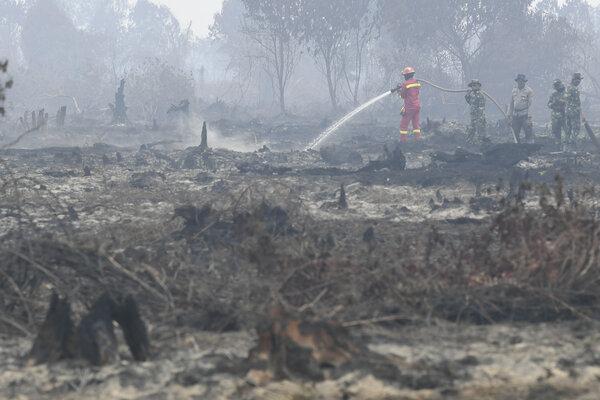 Petugas menangani kebakaran hutan dan lahan di Desa Merbau, Kecamatan Bunut, Pelalawan, Riau, Selasa (17/9/2019). Presiden menegaskan kepada seluruh pihak untuk mencegah kebakaran hutan dan lahan. - Antara/Puspa Perwitasari
