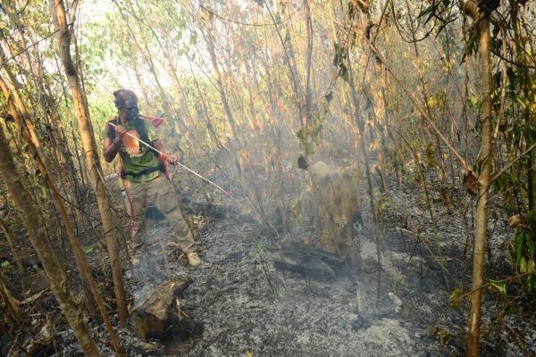 Seorang staf Centre for Orangutan Protection (COP) memadamkan api yang membakar lahan di Kecamatan Kelay, Kabupaten Berau, Kalimantan Timur, Kamis (12/9/2019). - ANTARA FOTO/Handout COP