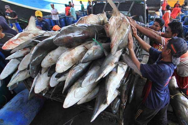 Nelayan memuat ikan hiu ke mobil di tempat pelelangan ikan Karangsong, Indramayu, Jawa Barat, Sabtu (5/1/2019). - ANTARA/Dedhez Anggara