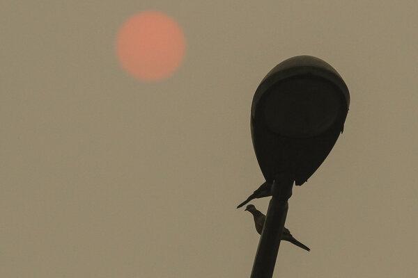 Dua ekor burung bertengger di atas tiang lampu penerangan jalan dengan latar belakang matahari yang terlihat samar akibat pekatnya kabut asap karhutla di Pekanbaru, Riau, Minggu (22/9/2019). Kebakaran hutan dan lahan yang masih terus terjadi di Provinsi Riau membuat Kota Pekanbaru terpapar kabut asap yang semakin pekat. - Antara/Rony Muharrman