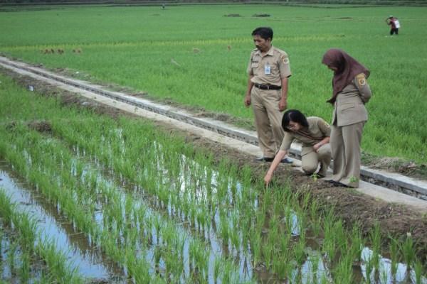 Tenaga penyuluh pertanian - Ilustrasi/mediatani.com