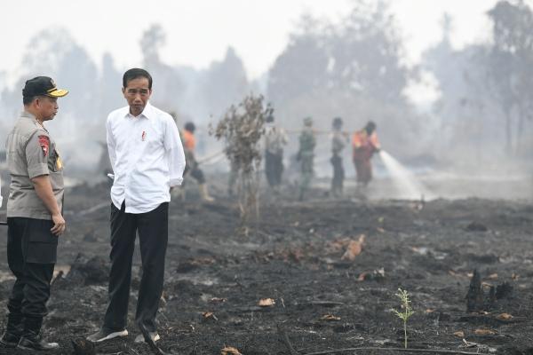 Presiden Joko Widodo (kanan) didampingi Kapolri Jenderal Pol Tito Karnavian meninjau penanganan kebakaran lahan di Desa Merbau, Kecamatan Bunut, Pelalawan, Riau, Selasa (17/9/2019) - ANTARA FOTO/Puspa Perwitasari