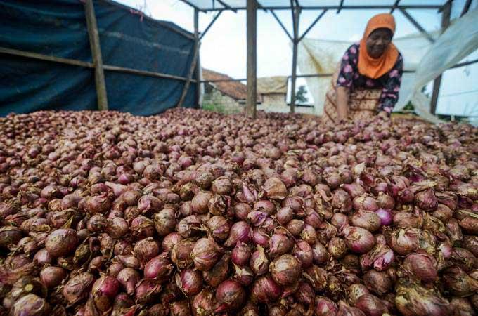 Petani mengeringkan bawang merah setelah dipanen di Kampung Cicayur, Cimenyan, Kabupaten Bandung, Jawa Barat, Selasa (7/5/2019). - ANTARA/Raisan Al Farisi