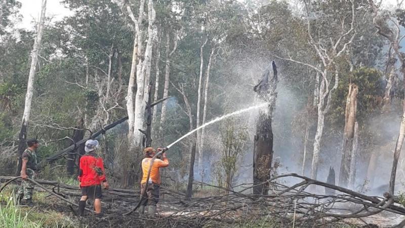 Tim gabungan sedang memadamkan kebakaran hutan di kawasan Taman Nasional Danau Sentarum wilayah Kapuas Hulu Kalimantan Barat. - Antara