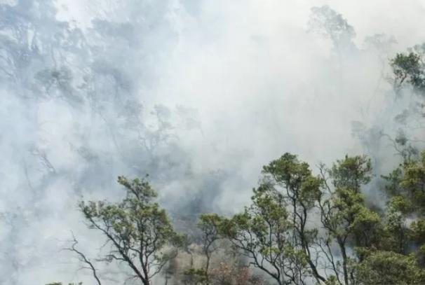 Kondisi hutan yang tertutup asap dari titik api yang membakar hutan tropis kawasan Taman Wisata Alam Kawah Putih Gunung Patuha, Kabupaten Bandung, Jawa Barat, Selasa (8/10/2019). - Antara
