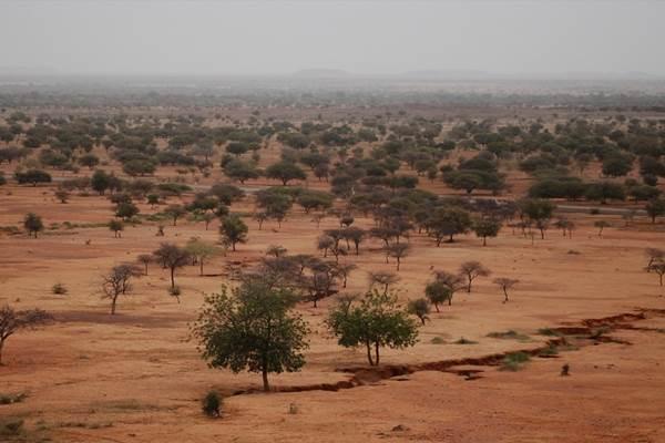 Kawasan terkering di Afrika, Sahel, berubah jadi hijau karena perubahan iklim. - Istimewa
