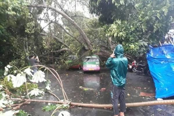 Ilustrasi angin kencang disertai hujan deras, petir dan pohon tumbang - Dok. BNPB