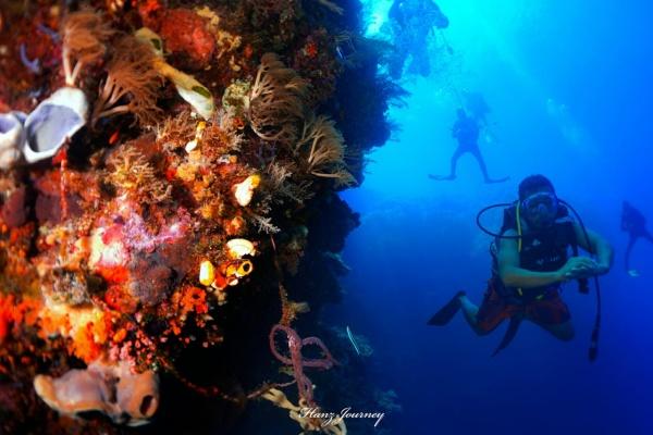 Pemandangan bawah laut Maumere, Kabupaten Sikka, Provinsi Nusa Tenggara Timur.