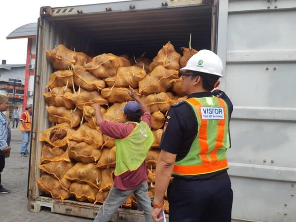 Petugas Bea Cukai Palembang menunjukkan kelapa ekspor Sumsel yang direimpor Thailand. Bisnis - Dinda Wulandari