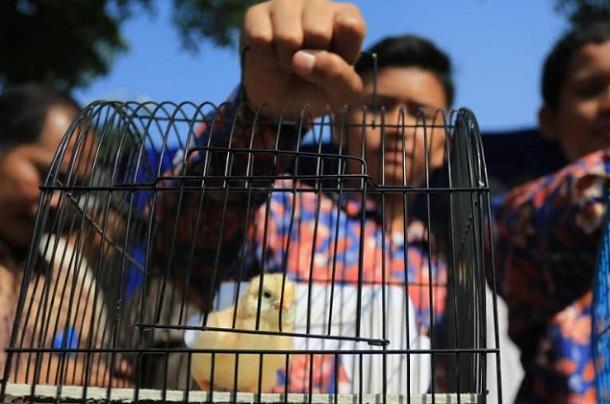 Pembagian anak ayam untuk siswa sekolah dasar di Kota Bandung - Bisnis/Dea Andriyawan