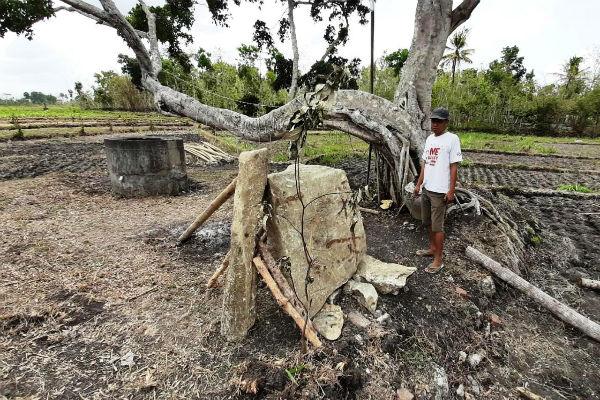 Seorang warga menunjukkan batu yang diduga menhir dan bergambar wayang yang ditemukan di salah satu lahan di Dusun Sawahan II, Desa Bleberan, Kecamatan Playen, Kamis (21/11/2019). - Harian Jogja/David Kurniawan