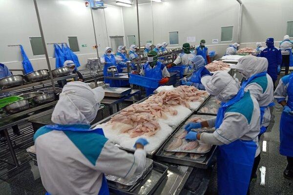 Proses produksi Tilapia di PT Aquafarm Nusantara Semarang. - Ist
