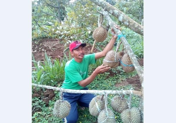 Ketua Gapoktan Tani Manunggal Tengger, Puhpelem, Wonogiri, Rimo, menunjukkan durian pogog yang siap panen awal 2019 lalu./Solopos.com/Istimewa - dok. pribadi Rimo