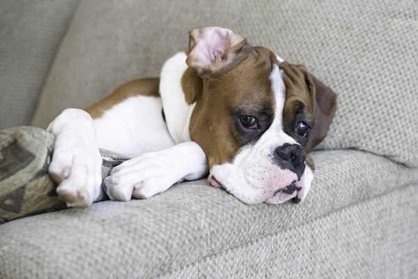 Seekor anjing - iheartdogs.com