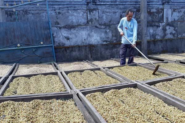 Petani kopi sedang mengolah biji kopi yang baru dipanen. - Bisnis/Dinda Wulandari