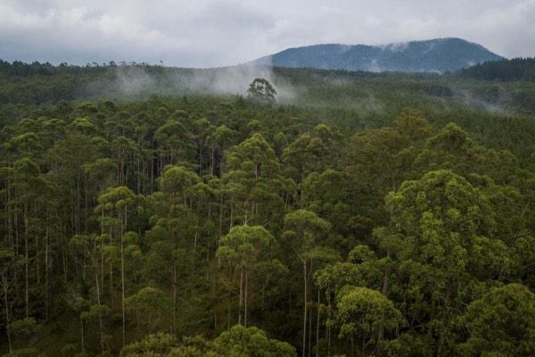 Foto udara hutan Cikole di dekat Bandung, Indonesia, Selasa (6/11/2018). - Antara/Raisan Al Farisi