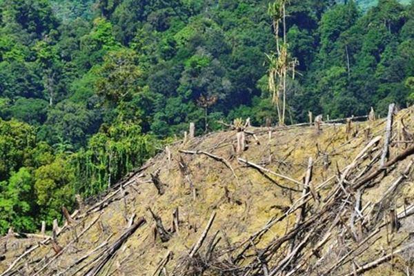 Kerusakan hutan. - Antara