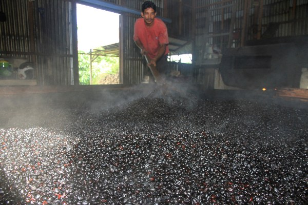 Pekerja meratakan biji kopi robusta usai disangrai. - Antara/Syifa Yulinnas