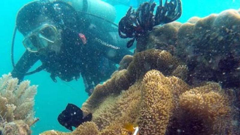 Penyelam menyusuri terumbu karang di Pulau Samalona, Kepulauan Spermonde, Sulawesi Selatan. - Antara/Dewi Fajriani