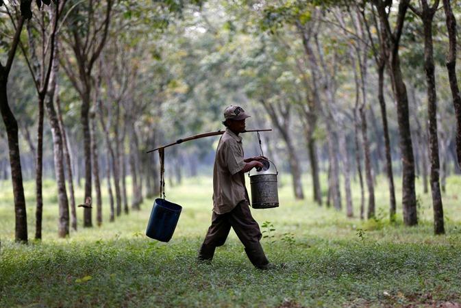Seorang pekerja mengumpulkan getah di perkebunan karet. - Reuters/Darren Whiteside
