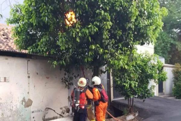 Petugas evakuasi dari Suku Dinas Penyelamatan dan Penanggulangan Kebakaran Jakarta Timur menyemprotkan api ke dahan pohon yang dihinggapi sarang tawon di kawasan Pulo Gadung, Selasa (3/12/2019). - Antara