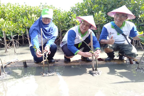 General Manager Pertamina MOR IV Iin Febrian (tengah) bersama jajarannya saat melakukan penanaman mangrove di kawasan Tambakrejo Semarang.