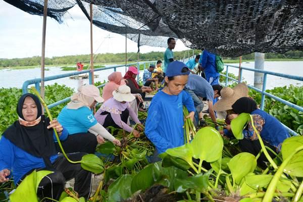 Tim Program Bongkar eceng gondok (Bonceng) Kuy ATB tengah membersihkan eceng gondok di Dam Duriangkang. - Istimewa/ATB