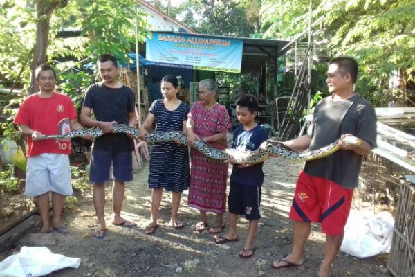 Tri Toto (Kanan) bersama keluarga dan warga Dusun Kemiri, menunjukkan ular piton yang telah berhasil ditangkap di rumahnya di Dusun Kemiri, Desa Margosari, Kecamatan Pengasih. - Ist