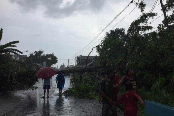Pohon tumbang di Dusun Kebonan, Desa Kalitirto, Berbah, Sleman, Rabu (25/12/2019). - Istimewa/Warga Dusun Kebonan