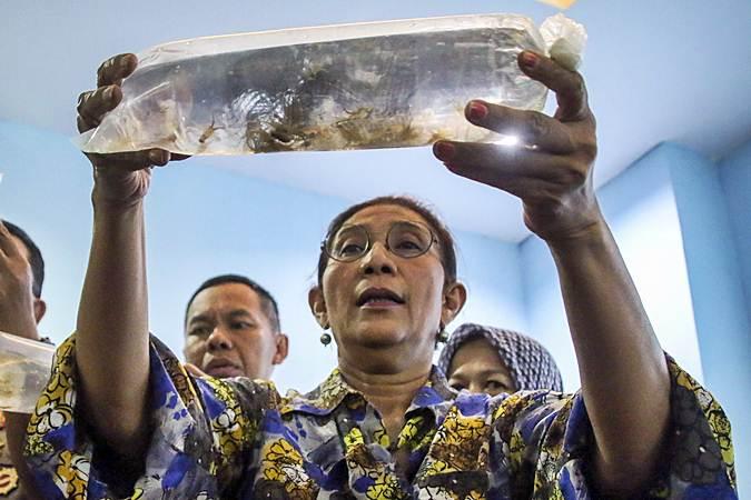 Mantan Menteri Kelautan dan Perikanan Susi Pudjiastuti menunjukkan barang bukti benih lobster yang berhasil diamankan saat memberikan keterangan pers di Kantor Pengawasan Sumber Daya Kelautan dan Perikanan (PSDKP) Batam, Kepulauan Riau, Senin (15/7/2019). - ANTARA/M N Kanwa