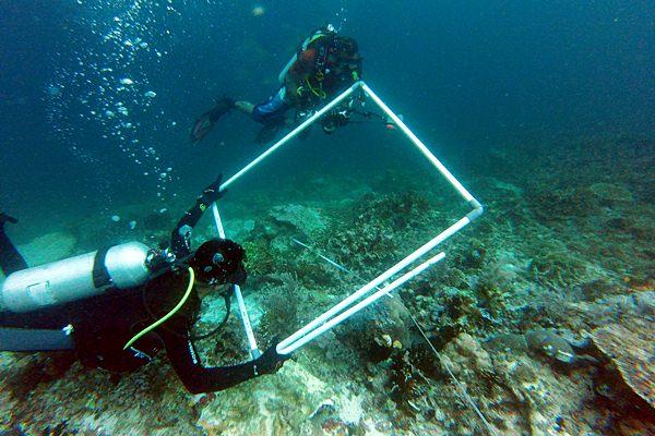 Tim peneliti mendata kerusakan karang saat kandasnya Kapal MV Caledonian Sky di perairan Raja Ampat, Papua Barat - Antara/Pemkab Raja Ampat