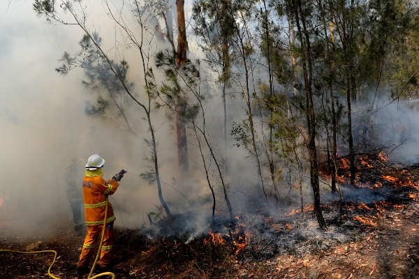 Seorang pemadam kebakaran melakukan penanganan atas kebakaran hutan dan semak-semak di Pegunungan Mangrove, New South Wales, Australia, Minggu (8/12/2019).) - AAP Image/Jeremy Piper via Reuters