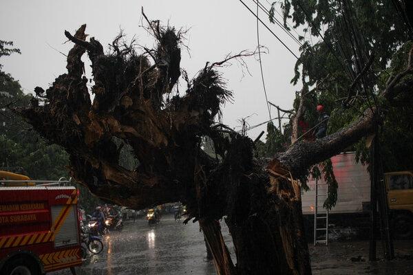 Petugas memotong pohon tumbang di Surabaya, Jawa Timur, Senin (6/1/2020). Puluhan pohon tumbang di sejumlah kawasan di Surabaya akibat hujan disertai angin kencang dan mengakibatkan dua orang meninggal karena tertimpa pohon tumbang di Jalan Johar, Surabaya. - Antara/Didik Suhartono