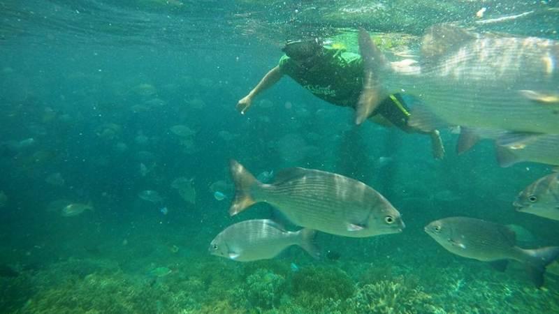 Keindahan salah satu objek wisata bawah laut di Raja Ampat. - Bisnis/Fariz Fadhilah